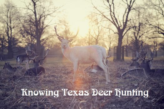 Knowing Texas Deer Hunting