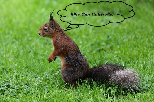 Is Squirrel Hunting Good in the Rain?