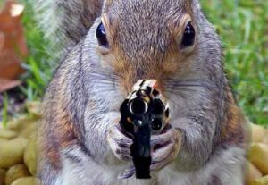 Squirrel with a pistol.
