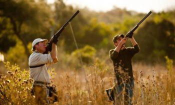 dove-hunting-tips