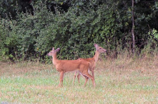 5 Tactics to Improve your Late Season Whitetail Hunts