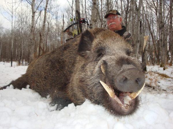 late season hog hunting