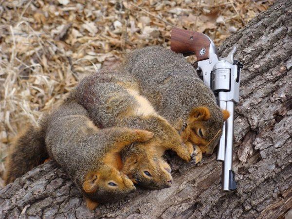 late season squirrel hunting