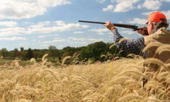 quail hunting tips