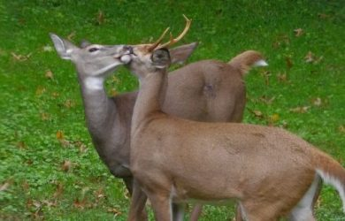 How Long Does the Rut Last